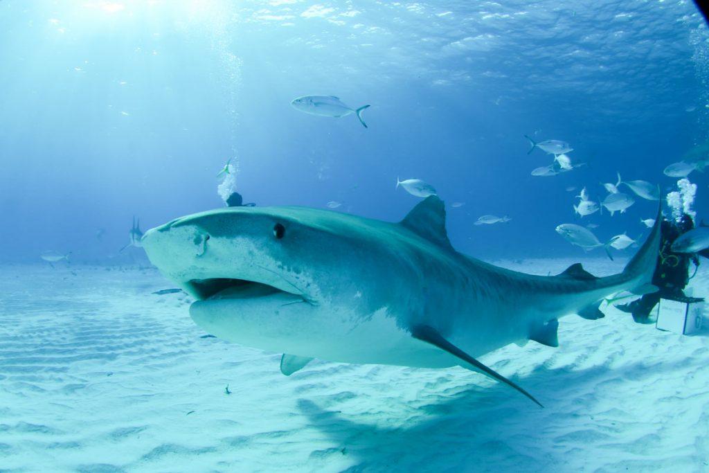 duiken-bahamas
