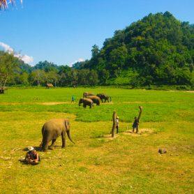 olifanten-chiang-mai