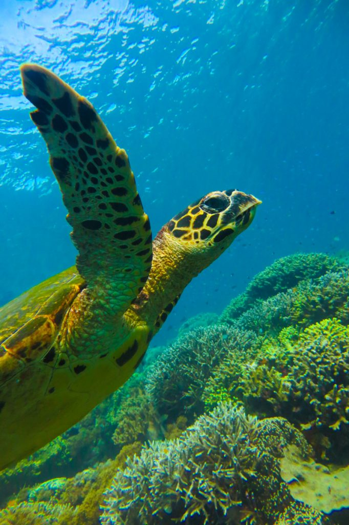 Filijnen-reisroute-duiken
