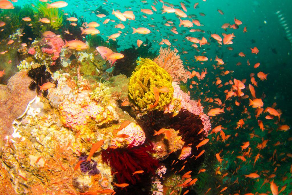 duiken-koh-lipe