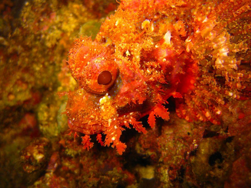 duiken-malapascua