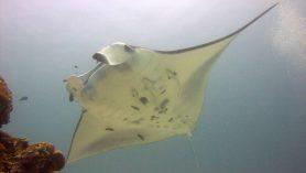 duiken-komodo