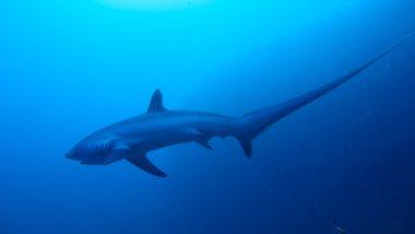 duiken-filipijnen