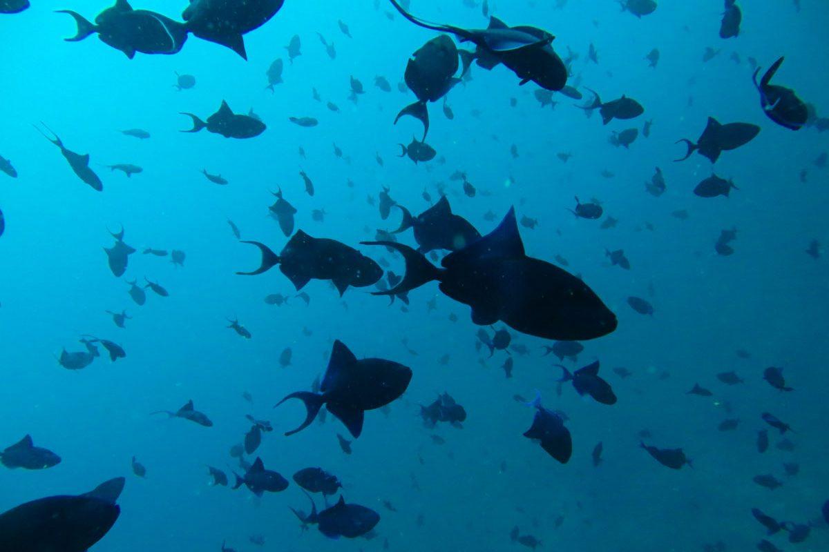 duiken-pulau-weh