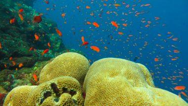 duiken-sumatra