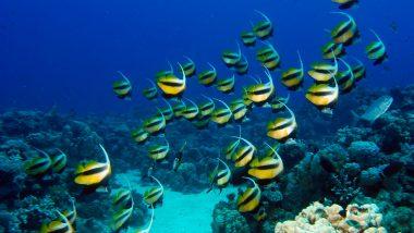 weetjes-duiken