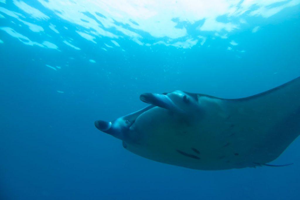 komodo-duiken