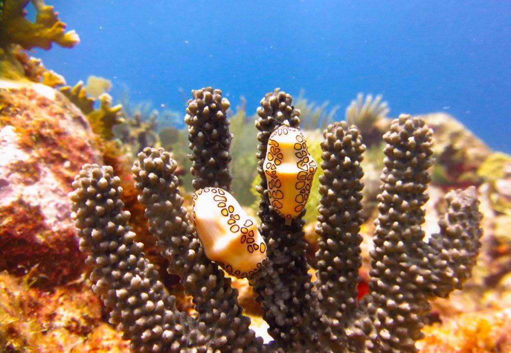 duiken-sintmaarten