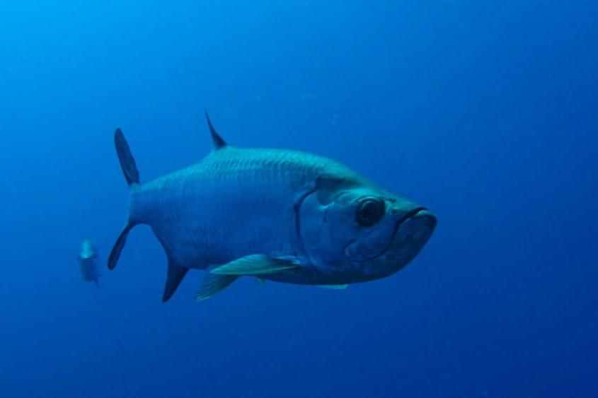 duiken-saba
