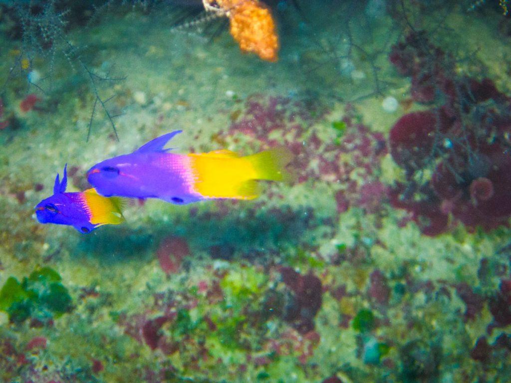 duiken-cuba